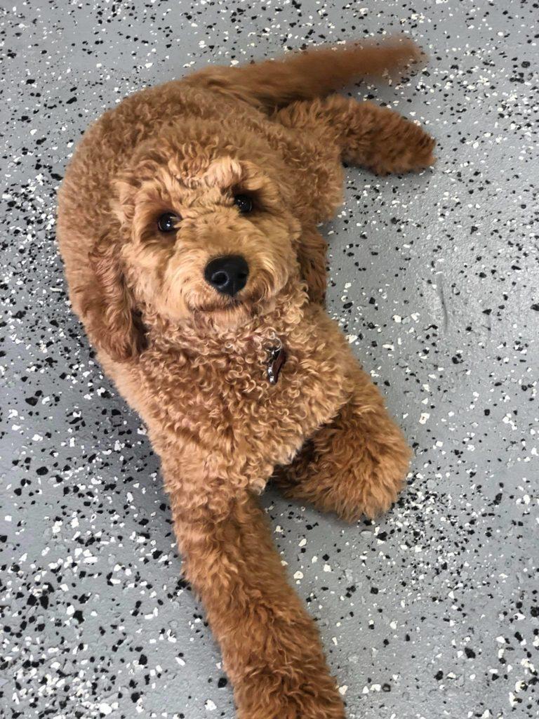 Dog por 6